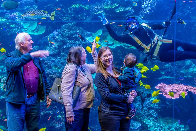GA Aquarium with Linc, Ali & Abe-38.jpg