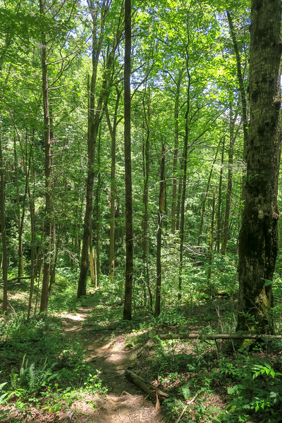 Boxcar Falls Path -- 2,560'