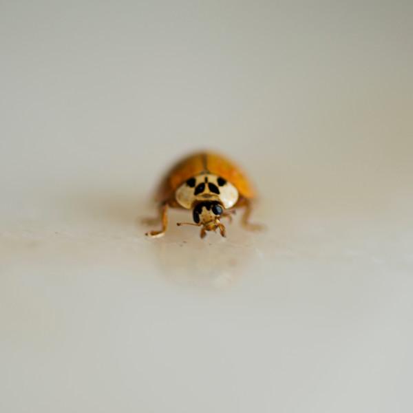 Ladybug 01.jpg