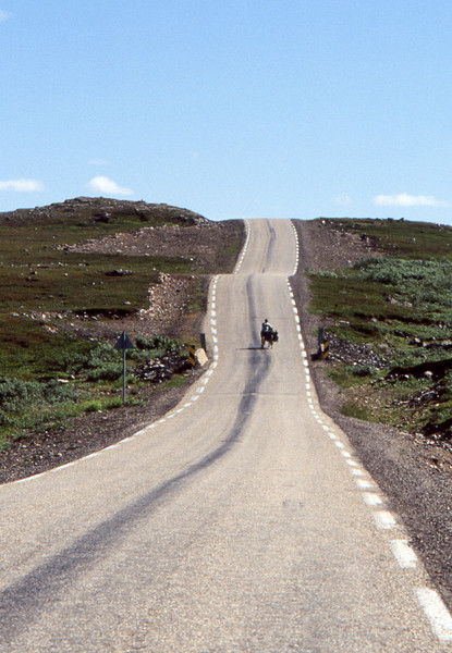 Tundra's Rush Hour - Somewhere South of Kjollefjord, Norway - July 1989