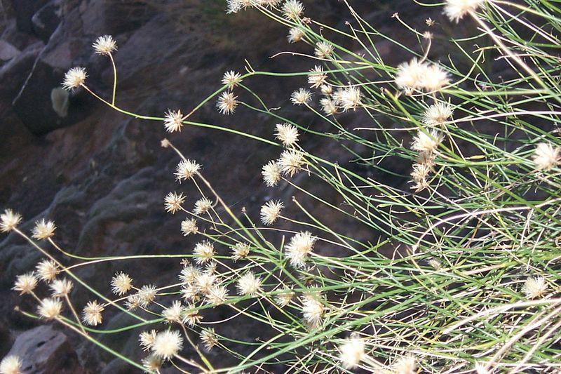 Pattern of Plants   (Jun 07, 1999, 06:46am)