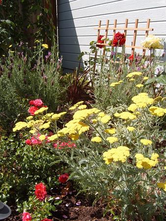 Cottage garden, Alameda, CA