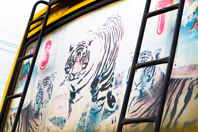 Tiger Window