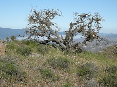 Carrizo: Caliente Peak Ridge 2011