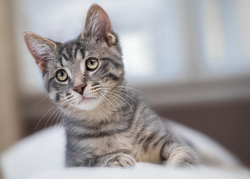 Kitten-154-Edit.jpg