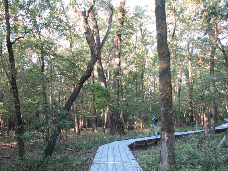 Big Oak Tree State Park