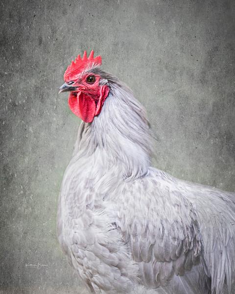 rooster_Mandela.jpg