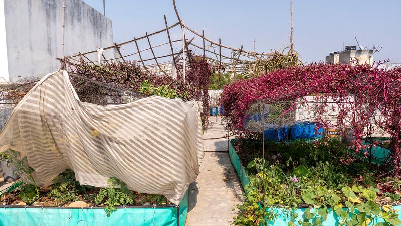 India-Jaipur-Ahimsagram05.jpg