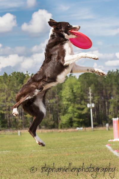 _MG_3293Up_dog_International_2016_StephaniellenPhotography.jpg