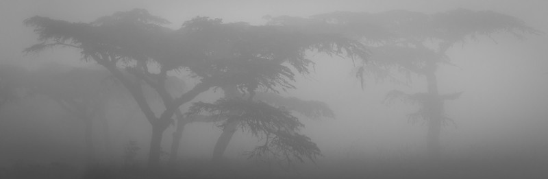 Acacia trees silhouetted in pre-dawn mist, Ngorongoro Crater