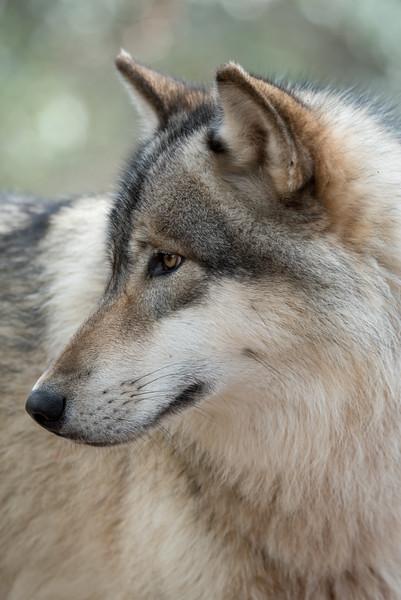 Seacrest Wolves_-63.jpg