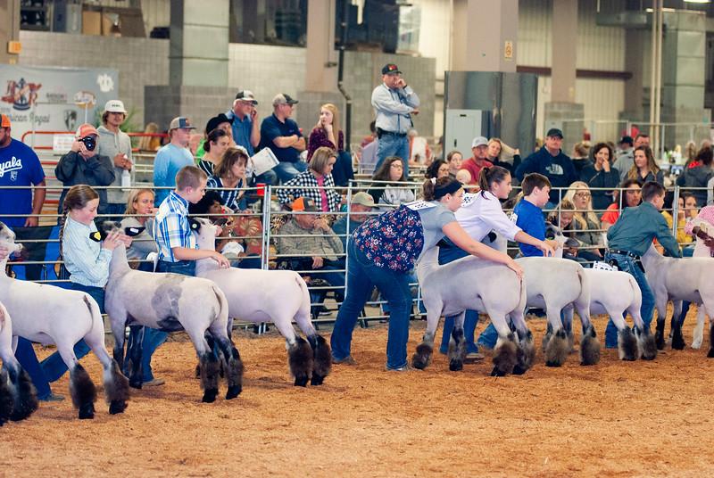 SHEEP_201918-109.jpg