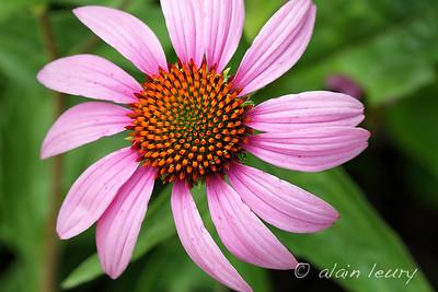 Flowers-Fleurs