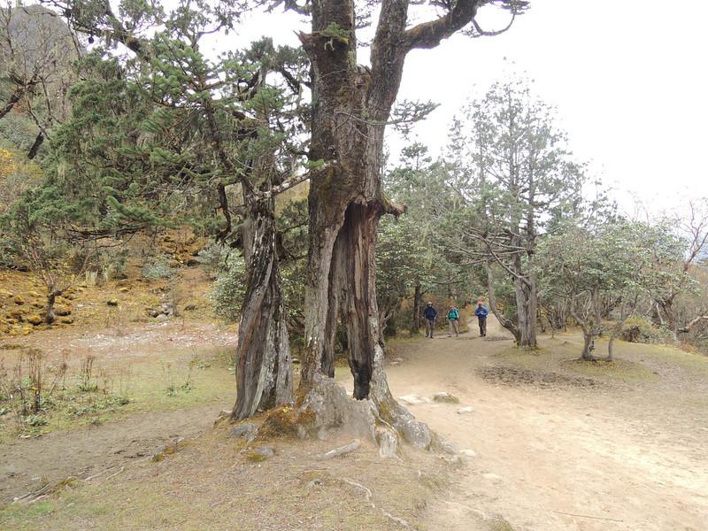 2013-Nepal-2835.jpg