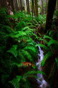 Fern Forest Falls