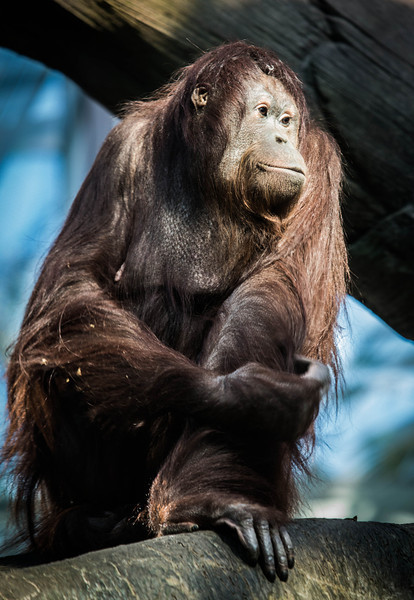 zoo-1594.jpg