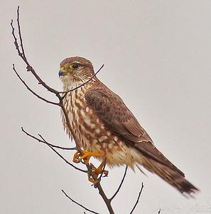 Anahauc National Wildlife Refuge  2-11-18