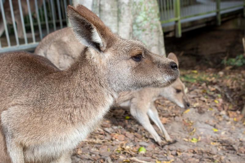 Australia_197.jpg