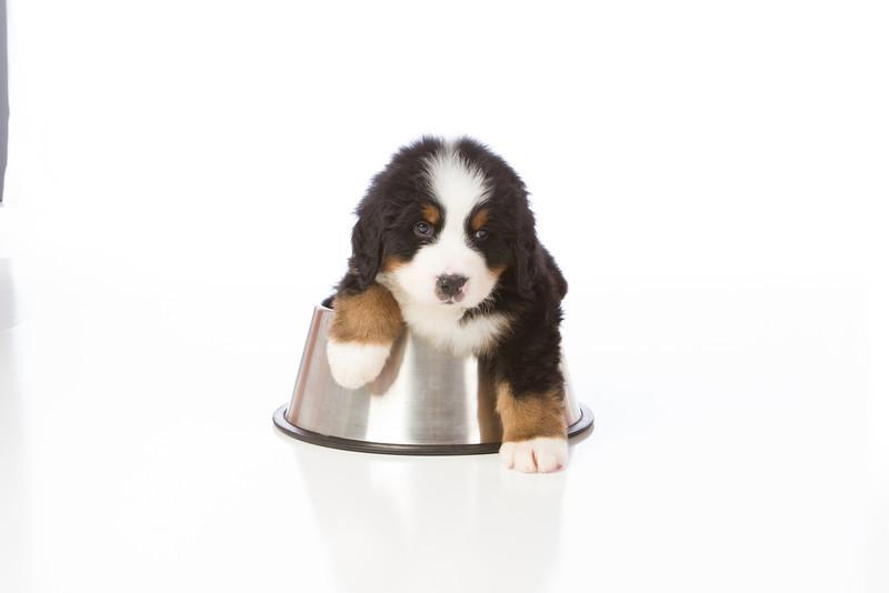 2013-Pearson Pups-Jun02-0357.jpg
