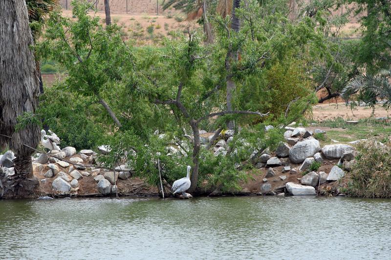 San Diego Sagas: The Wild Animal Park