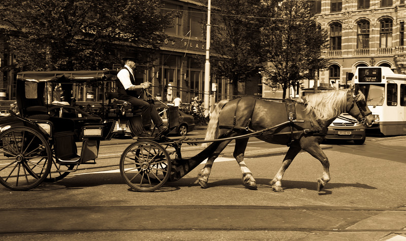 Horse cart in Amsterdam