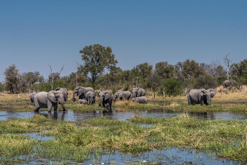 Botswana_June_2017 (3271 of 6179).jpg