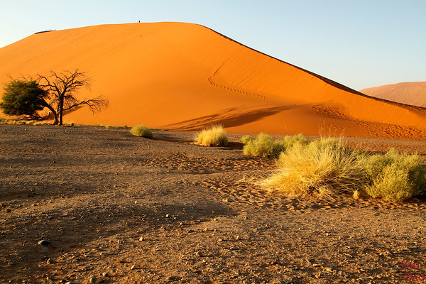 Sunrise at dune 45, Sossusvlei, Namibia photo 3