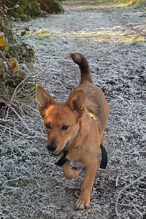 FROSTY NOVEMBER DOG WALK