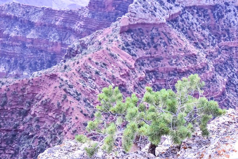 2019 Grand Canyon-270.jpg