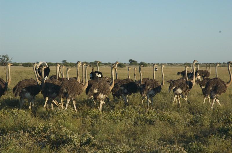 Kalahari - Leslie Rowley