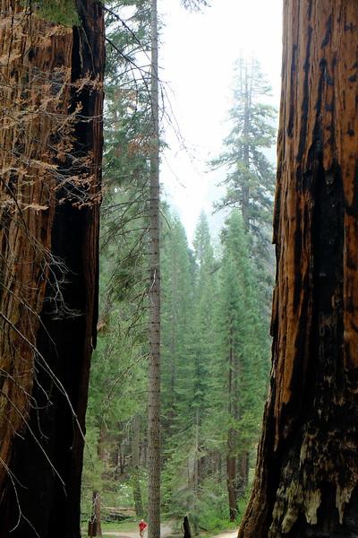 California Day 6 Sequoia 05-30-2017 71.JPG