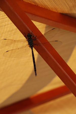 2012 09 18: Dragon Fly, Home, Umbrella, Deck