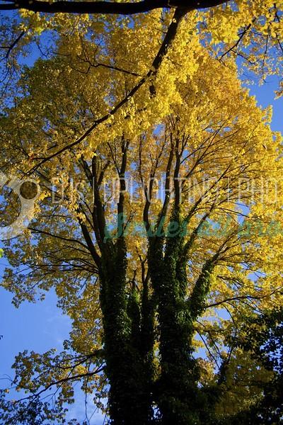 Bright-Autumn-Tree_batch_batch.jpg