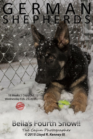 Bellas Fourth Snow - 18 Weeks 5 Days Old