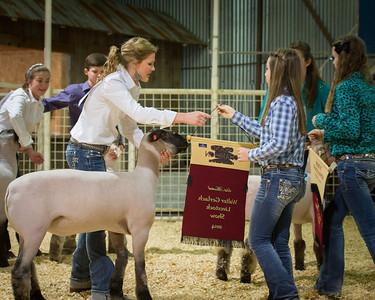 2014 Gerlach Livestock - Lambs