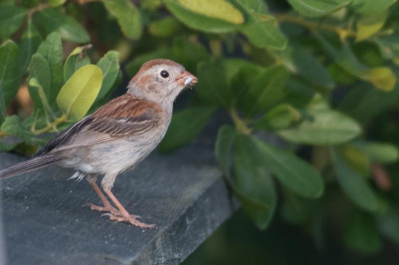19-Sept North America Birds-4407.JPG