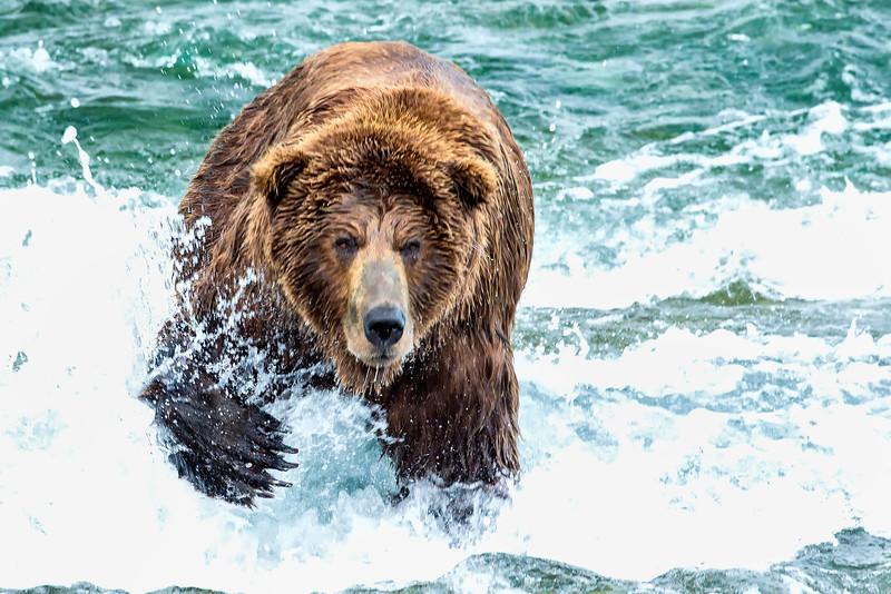Alaska_2013_FH0T8346.jpg