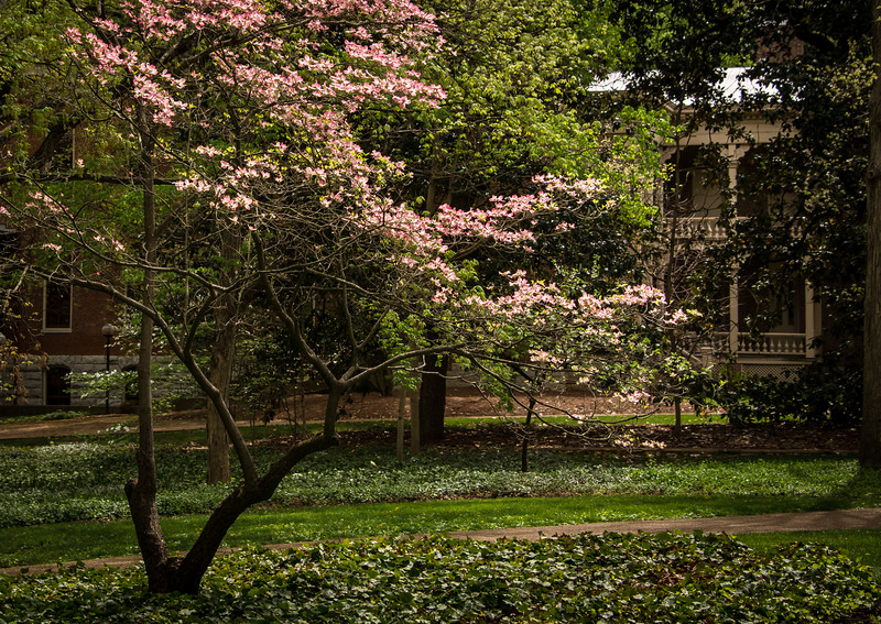 Spring at Vanderbilt-20150410-18_10_49-Rajnish Gupta.jpg