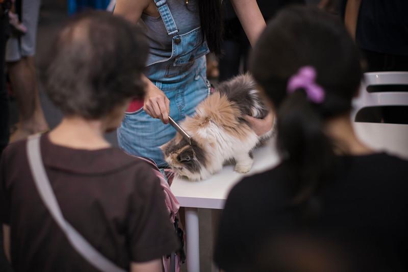 VividSnaps-The-Seletar-Mall-CAT-Dress-Up-Contest-098.jpg