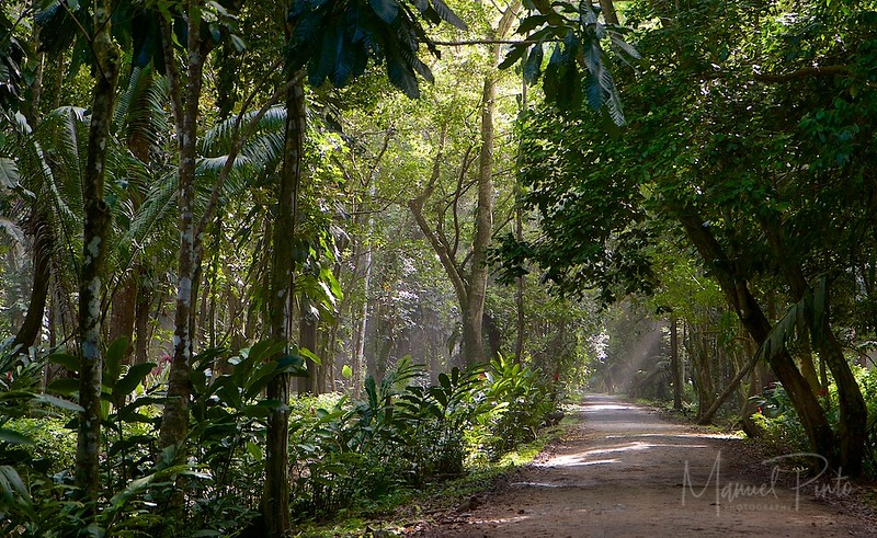 Through the forest...to the beach