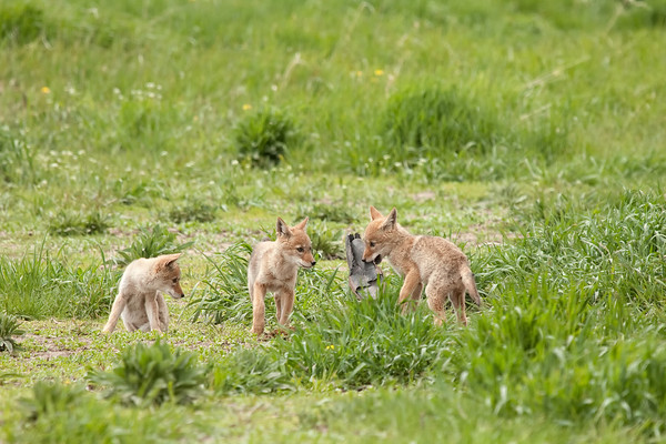 Grand Teton National Park (6/2011)