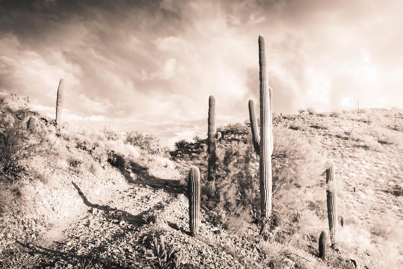 Desert Landscape in Black and White
