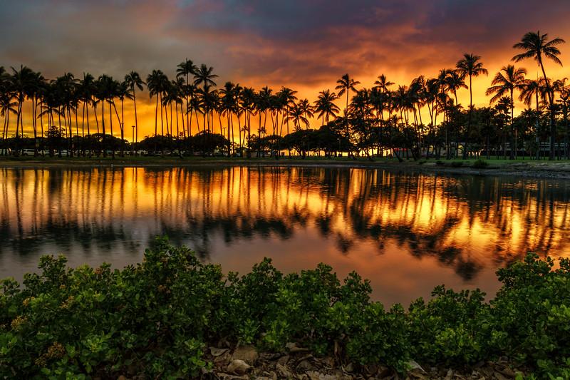 Palm Trees of Ala Moana