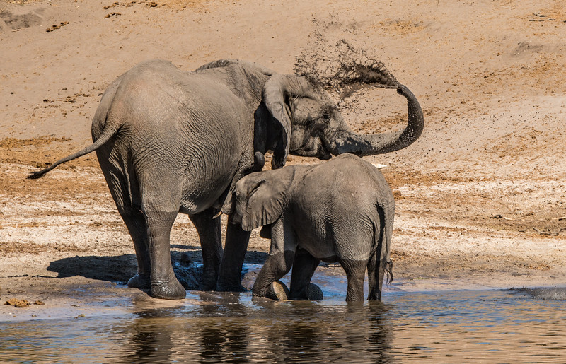 Z_4_2006_A_Baby Elephant Feeding_makeup 93 HM.jpg