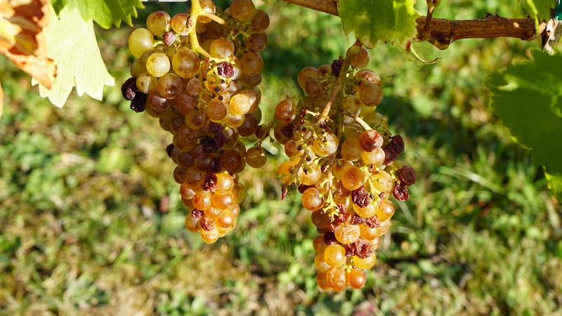 10-10 Alsace wine tour and Obernai, FR