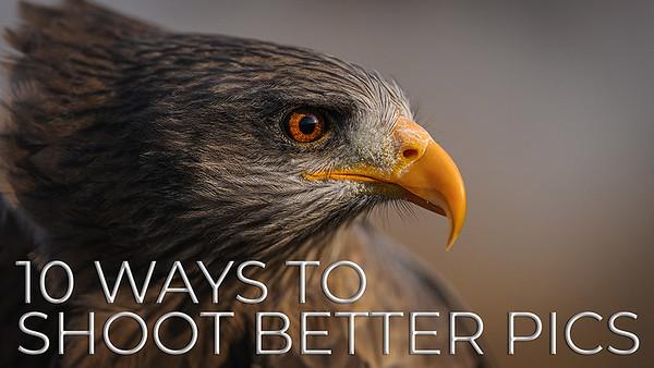 10 Ways to Shoot Better Wildlife Photographs