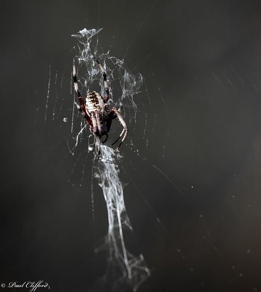 Smaller Spider 6766 C1.jpg