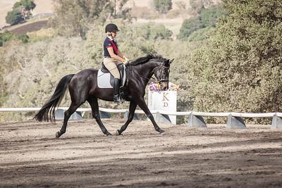 Black horse w star red