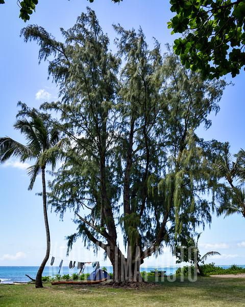 Kauai2017-277.jpg