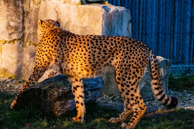Tonis Zoo-0377.jpg